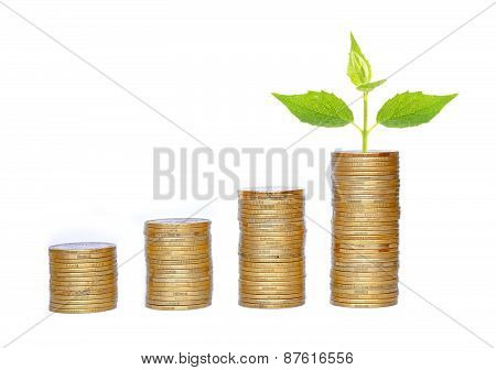 Many Coins In Column And Green Plant Isolated On White