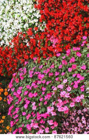 ?arpet Of Flowers Impatiens