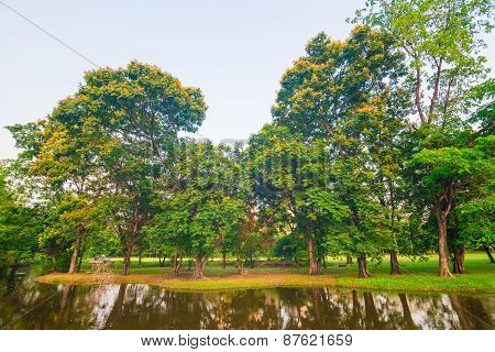 Beautiful Green Park Tree And Swamp