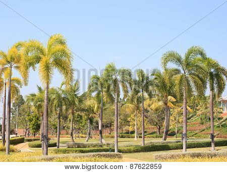 Natural Palm Tree Park Against Clear Blue Sky Background