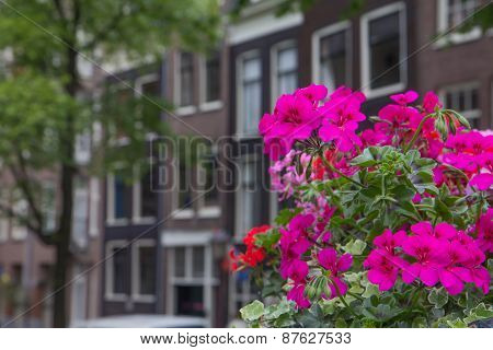Houses In Amsterdam With Flowers In The Foreground