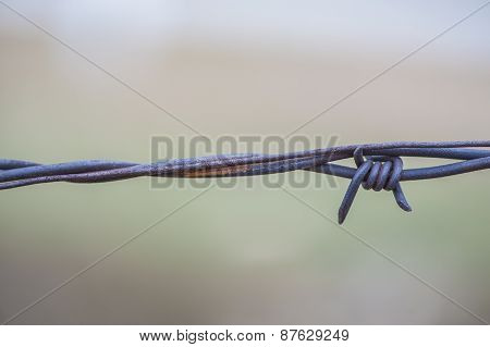 Macro View Barbed Wire Fence