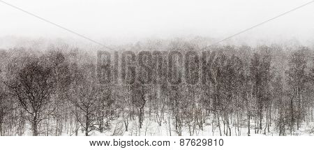 Above View On Snow Storm In Forest