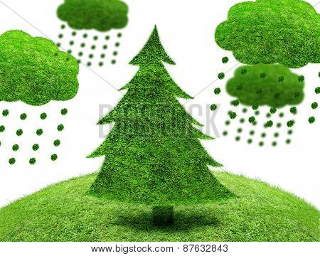 Green Fir Tree On A Patch Of Grass