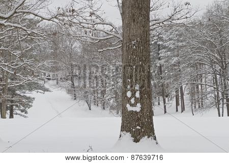 Happy Snow Faced Tree In A Winter Wonderland