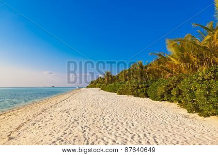 Maldives beach - nature vacation background
