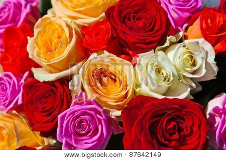 Colorful roses bouquet - beautiful floral background