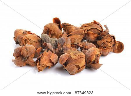 Indian Rose Chestnut Herb On White Background