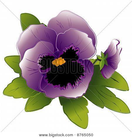 Lavender Pansies