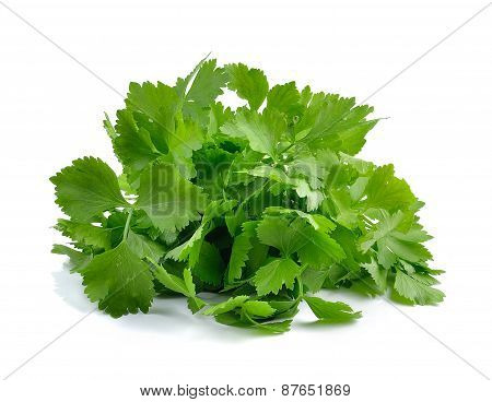 Fresh Green Celery Isolated On White Background