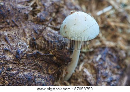 Close Up Mushroom In Deep Forest