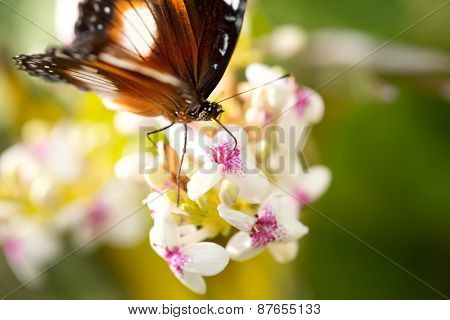 Beautiful butterfly with elegant patterns in nature