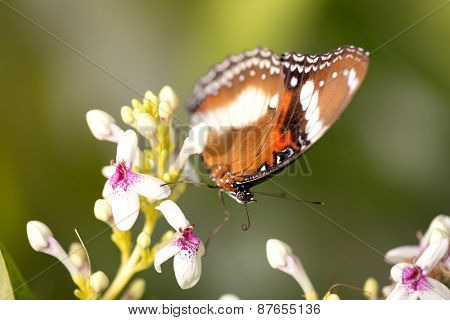 colorful butterfly with beautiful patterns in nature