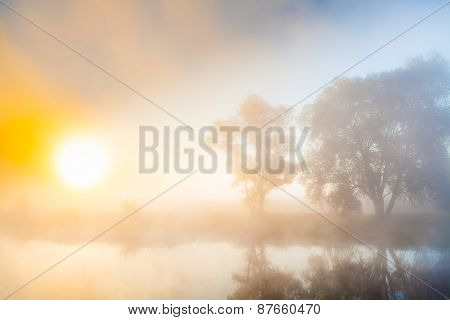Misty dawn and silhouettes of the trees by a river