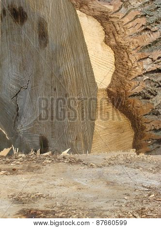 Detail Of A Cut Log Tree With Splinters And Chips
