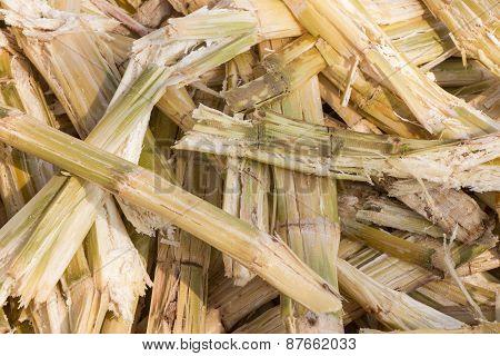 Sugarcane bagasse Background