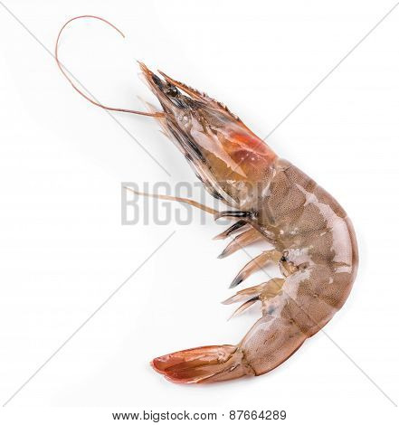 Raw tiger shrimp on white.