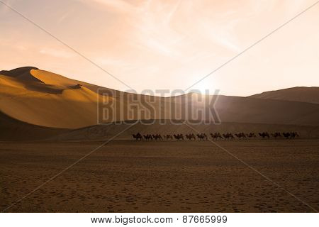 Camel Caravan Going Through The Sand Dunes In The Gobi Desert, China