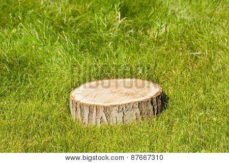 Tree stump on green grass
