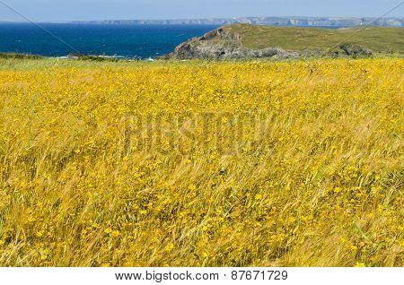 Wild Flower Meadow Cliffs And Ocean Background