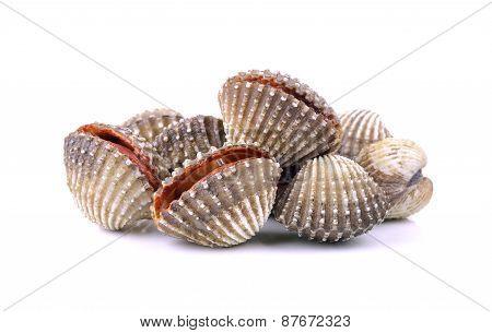 Clam Shellfish Food