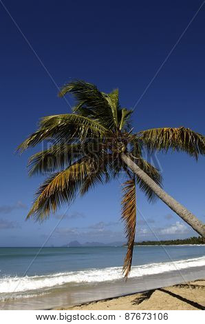 France, Martinique, Salines Beach In Sainte Anne