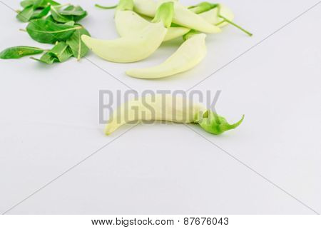Vegetable Humming Bird