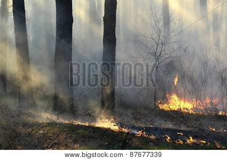 Near Kiev, Ukraine -April 11, 2015: Severe drought. Fires destroy forest and steppe. April 11, 2015 Near Kiev, Ukraine.