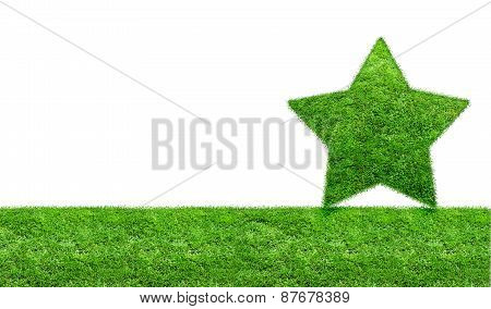 The Green Grass Star On A Green Meadow.