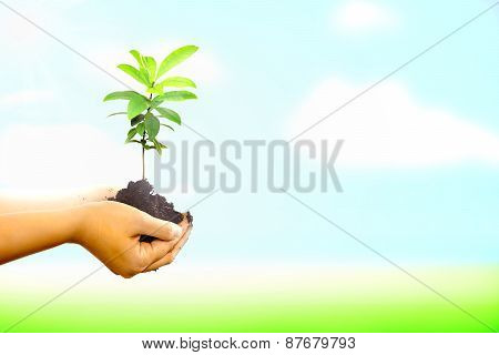 Woman Dirty Hand Holding A New Tree