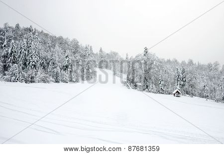 Ski Slopes In The Coniferous Forest In 'kolasin 1450' Mountain Ski Resort With Unknown People Skiing
