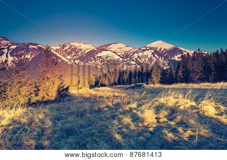 Majestic view of snowy peaks glowing by sunlight. Dramatic morning scene. Carpathian, Ukraine, Europe. Beauty world. Retro and vintage style, soft filter. Instagram toning effect.
