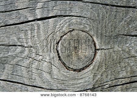 Gray Wood Knothole