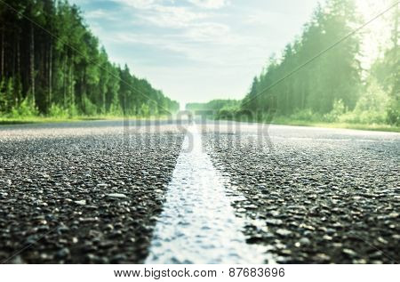 road in sunny forest (shallow DOF)