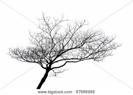 Silhouette Of Lonely Tree Isolated