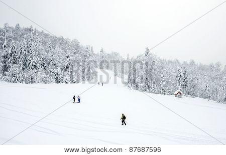 Kolasin, Montenegro - February 1: Ski Slopes In The Coniferous Forest In 'kolasin 1450' Mountain Ski