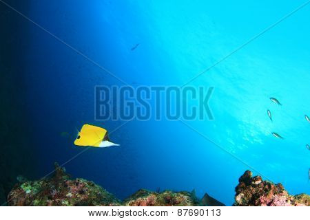 Coral Reef and Butterflyfish