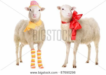 Two Sheep In Christmas Clothes