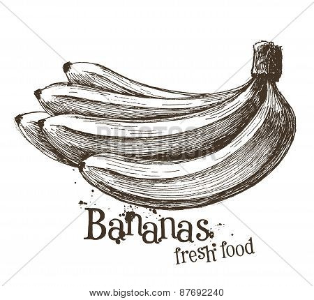 bananas vector logo design template. fruit or food icon.