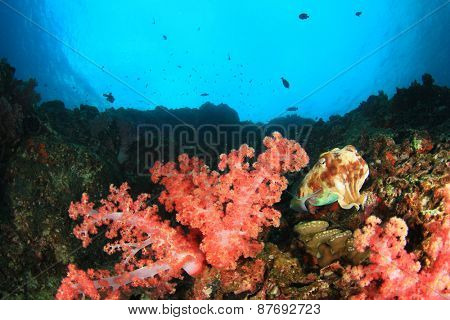 Coral reef underwater with cuttlefish