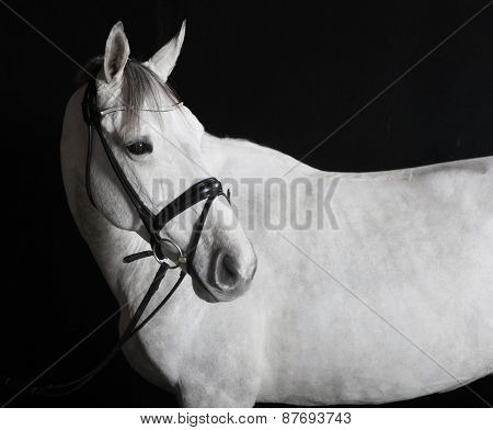 White Horse In The Studio