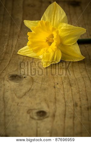 Narcissus On Wooden Table