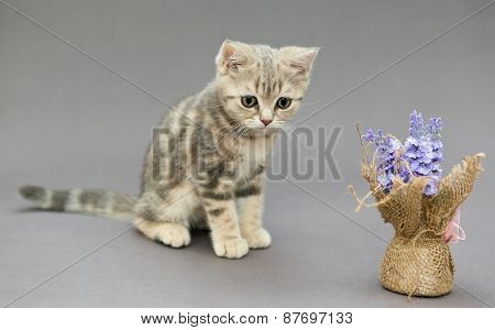 Little British Kitten Marble Colors  And Flower