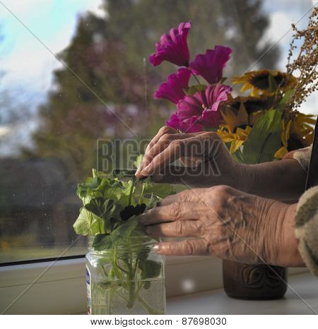 Flowers On A Window