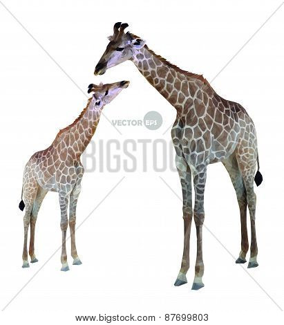 two geometric giraffes, isolated on white background, vector illustration