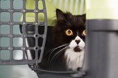 stock photo of veterinary clinic  - Cat in the transporter at a veterinary clinic - JPG