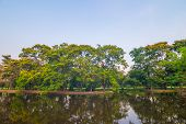 image of swamps  - Beautiful green park tree and swamp Serenity scence  - JPG