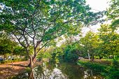 picture of swamps  - Beautiful green park tree and swamp Serenity scence - JPG