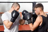 pic of sparring  - Boxing game - JPG