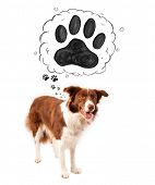stock photo of border collie  - Cute brown and white border collie thinking about a paw in a thought bubble above his head - JPG